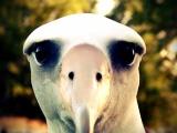 The Windy Albatross